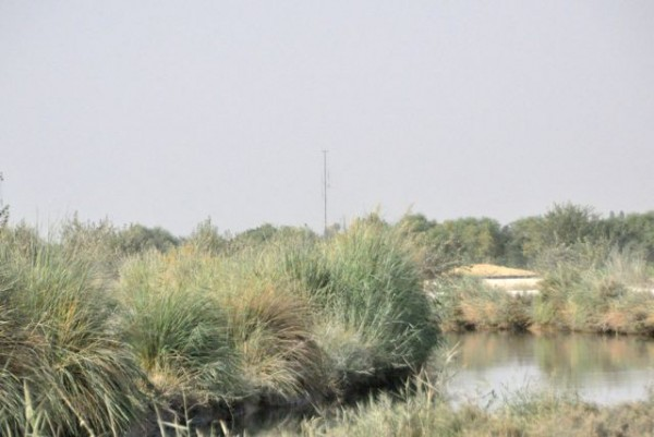 See the GBOSS tower off in the distance? This picture was taken from a PB which also has a GBOSS - they now have enough ISR that the Marines can watch the entire main road which runs through the Southern Helmand